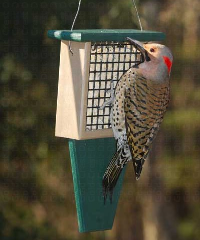 Woodpecker Feeder With Tail Prop