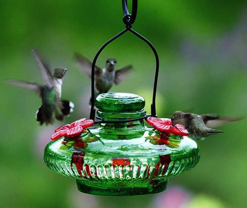 Attract More Hummingbirds